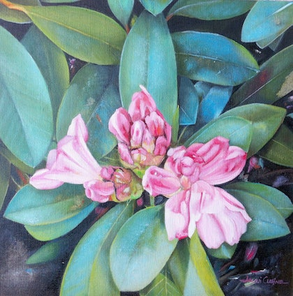 (CreativeWork) Rhododendron Delights by Jacqui Cleijne. oil-painting. Shop online at Bluethumb.