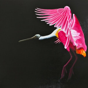 (CreativeWork) Roseate Spoonbill by Trevor Brown. oil-painting. Shop online at Bluethumb.
