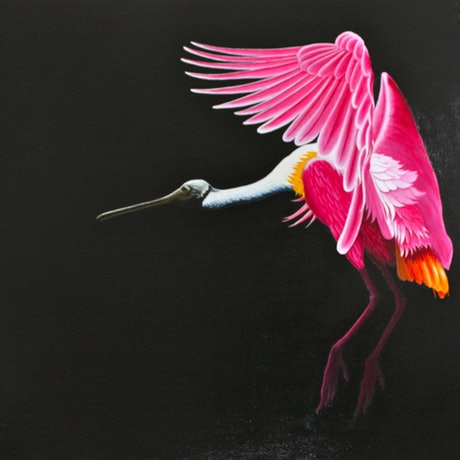 (CreativeWork) Roseate Spoonbill by Trevor Brown. Oil Paint. Shop online at Bluethumb.