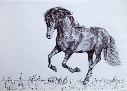 (CreativeWork) Horse2 by Alexey Prokopenko. drawing. Shop online at Bluethumb.