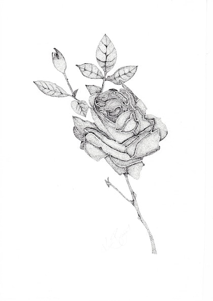 (CreativeWork) Rose by Kim Bagot-Hiller. drawing. Shop online at Bluethumb.