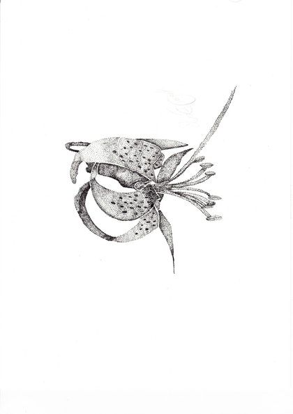 (CreativeWork) Tiger  Lily by Kim Bagot-Hiller. drawing. Shop online at Bluethumb.