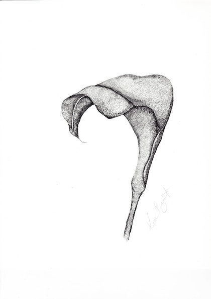 (CreativeWork) Arum Lily  by Kim Bagot-Hiller. drawing. Shop online at Bluethumb.