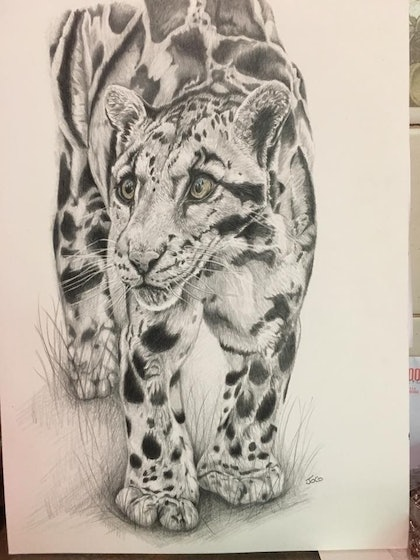 (CreativeWork) Clouded Leopard unframed  by Jo Coleman. drawing. Shop online at Bluethumb.
