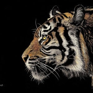 (CreativeWork) Tiger, Tiger by Belle Stone. #<Filter:0x00007fc198c22340>. Shop online at Bluethumb.