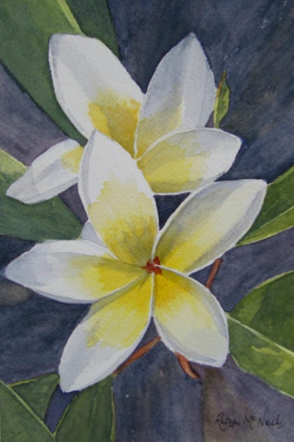 (CreativeWork) Tropical Love-Frangipani Flower by Robyn McNeil. watercolour. Shop online at Bluethumb.