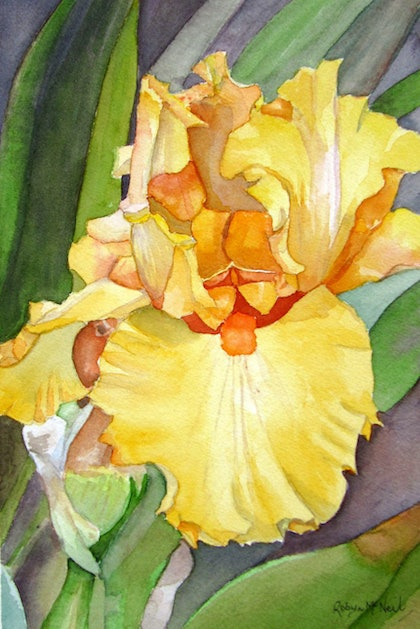 (CreativeWork) Yellow Iris Flower by Robyn McNeil. watercolour. Shop online at Bluethumb.