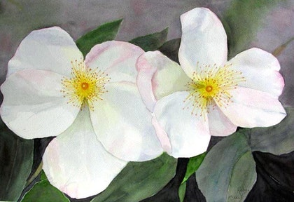 (CreativeWork) Dupont Rose by Robyn McNeil. watercolour. Shop online at Bluethumb.