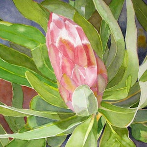 (CreativeWork) Protea Beauty by Robyn McNeil. watercolour. Shop online at Bluethumb.