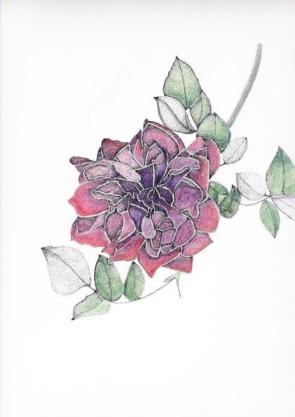 (CreativeWork) Red Rose by Kim Bagot-Hiller. drawing. Shop online at Bluethumb.