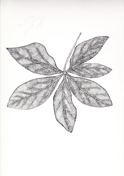 (CreativeWork) Hellebour Leaf by Kim Bagot-Hiller. drawing. Shop online at Bluethumb.