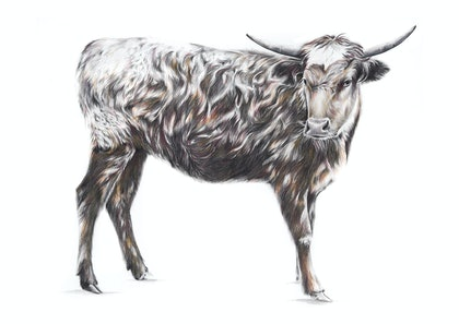 (CreativeWork) BOS TAURUS // LIMITED EDITION GICLÉE PRINT by Jess Le Clerc. print. Shop online at Bluethumb.