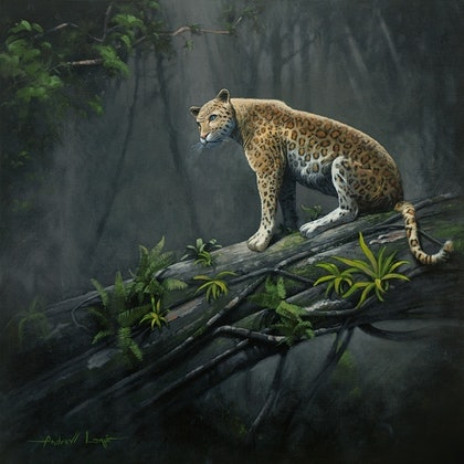 (CreativeWork) Leopard, Forest Light by Andrew Lome. arcylic-painting. Shop online at Bluethumb.