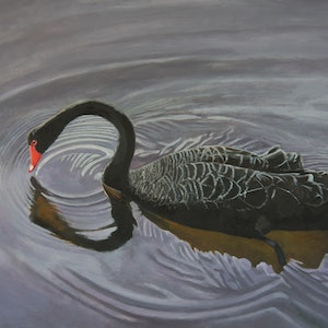 (CreativeWork) Black Swan by Rob Kennedy. oil-painting. Shop online at Bluethumb.