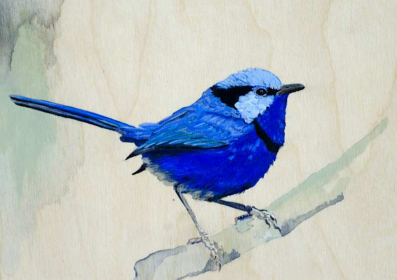 (CreativeWork) Fairy-wrens by Lydie Paton. mixed-media. Shop online at Bluethumb.