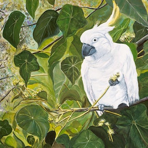 (CreativeWork) Chewing the Macaranga  by Julie Schofield. arcylic-painting. Shop online at Bluethumb.