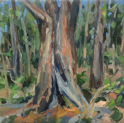 (CreativeWork) On the Bibbulmun Track: plein-air by Steven Makse. oil-painting. Shop online at Bluethumb.