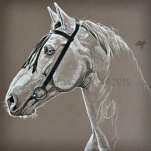 (CreativeWork) Bridled Beauty by Ainslie Gilles-Patel. drawing. Shop online at Bluethumb.