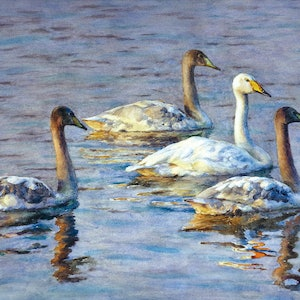 (CreativeWork) Swan Mother with Her Kids Ed. 2 of 30 by Richard(Tiejun) Chao. print. Shop online at Bluethumb.