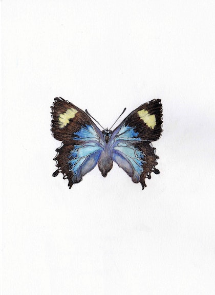 (CreativeWork) Genoveva Azure - Butterfly - Female by Anastasia Fitter. drawing. Shop online at Bluethumb.