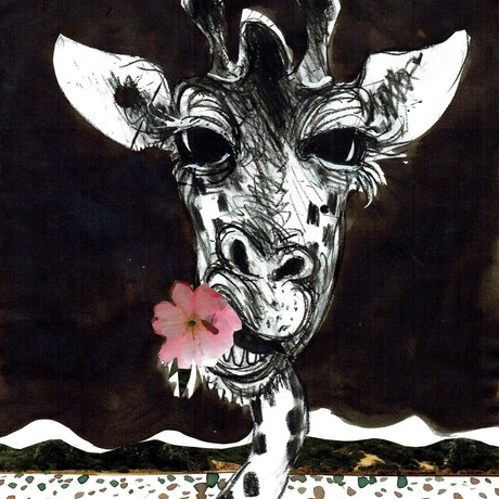 (CreativeWork) Giraffe eating roses number 2 by John Graham. Mixed Media. Shop online at Bluethumb.