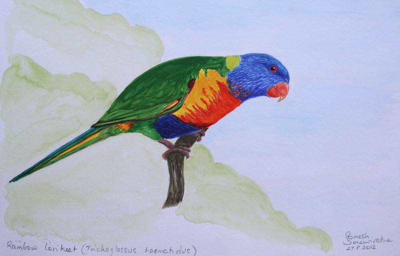 (CreativeWork) Rainbow Lorikeet by Romesh Senewiratne. watercolour. Shop online at Bluethumb.