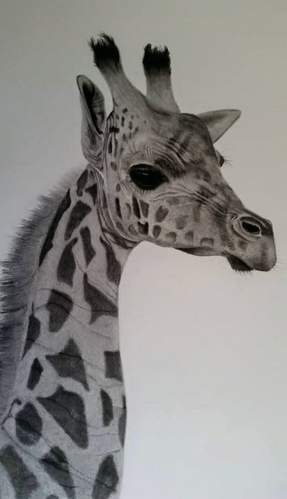 (CreativeWork) Nature's Grace by Simon Fitzpatrick. drawing. Shop online at Bluethumb.