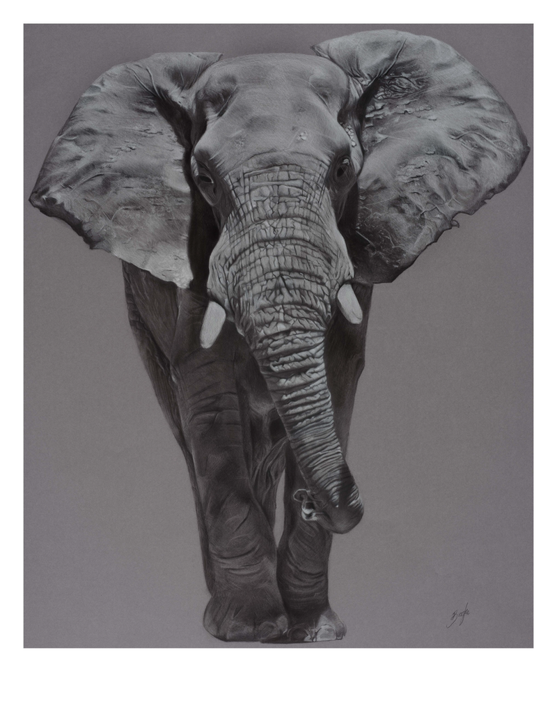 (CreativeWork) ELEPHANTIDAE - Limited Edition Print (8 of 10) by Brooke Walker. print. Shop online at Bluethumb.