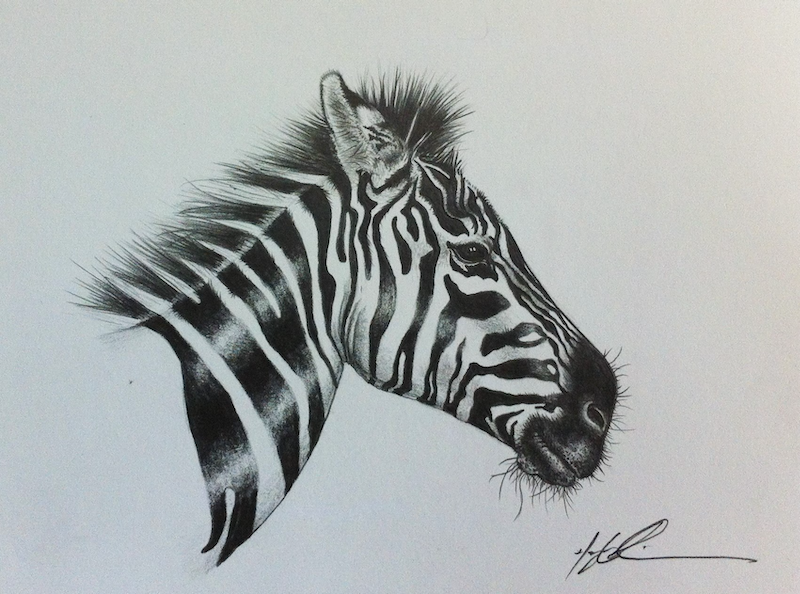 (CreativeWork) Zebra by Hayley Robinson. drawing. Shop online at Bluethumb.