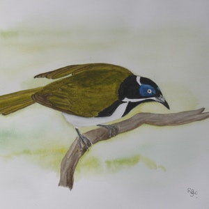 (CreativeWork) Blue-Faced Honeyeater by Romesh Senewiratne. watercolour. Shop online at Bluethumb.