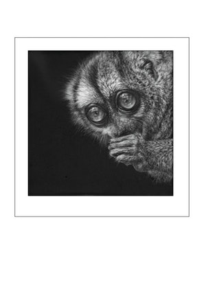 (CreativeWork) Nocturnal Treasure - 2 of 25 Ed. 2 of 25 by Geraldine Simmons. Print. Shop online at Bluethumb.