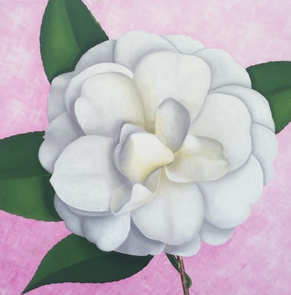 (CreativeWork) White camellia by Libby Moore. arcylic-painting. Shop online at Bluethumb.
