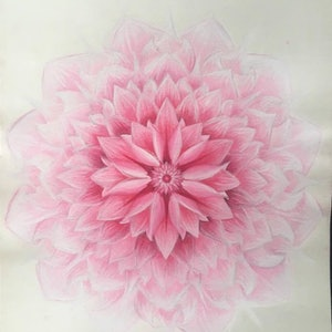 (CreativeWork) Soft Pink Lotus Flower. Unframed. by Jessica Towers. watercolour. Shop online at Bluethumb.