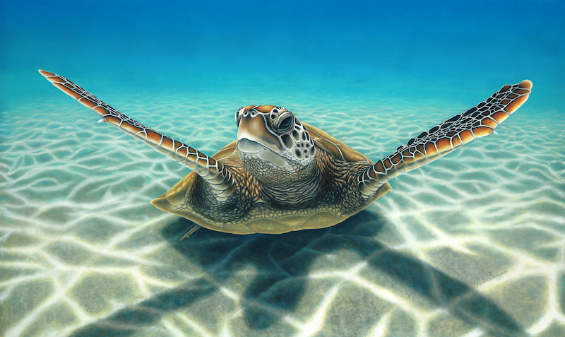 (CreativeWork) Green Turtle by Renata Bruynzeel. drawing. Shop online at Bluethumb.