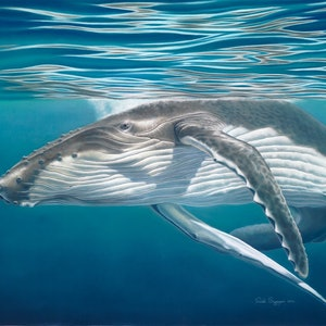 (CreativeWork) Humpback whale calf by Renata Bruynzeel. other-media. Shop online at Bluethumb.