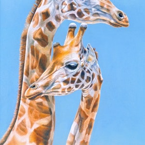 (CreativeWork) Giraffes  by Renata Bruynzeel. drawing. Shop online at Bluethumb.
