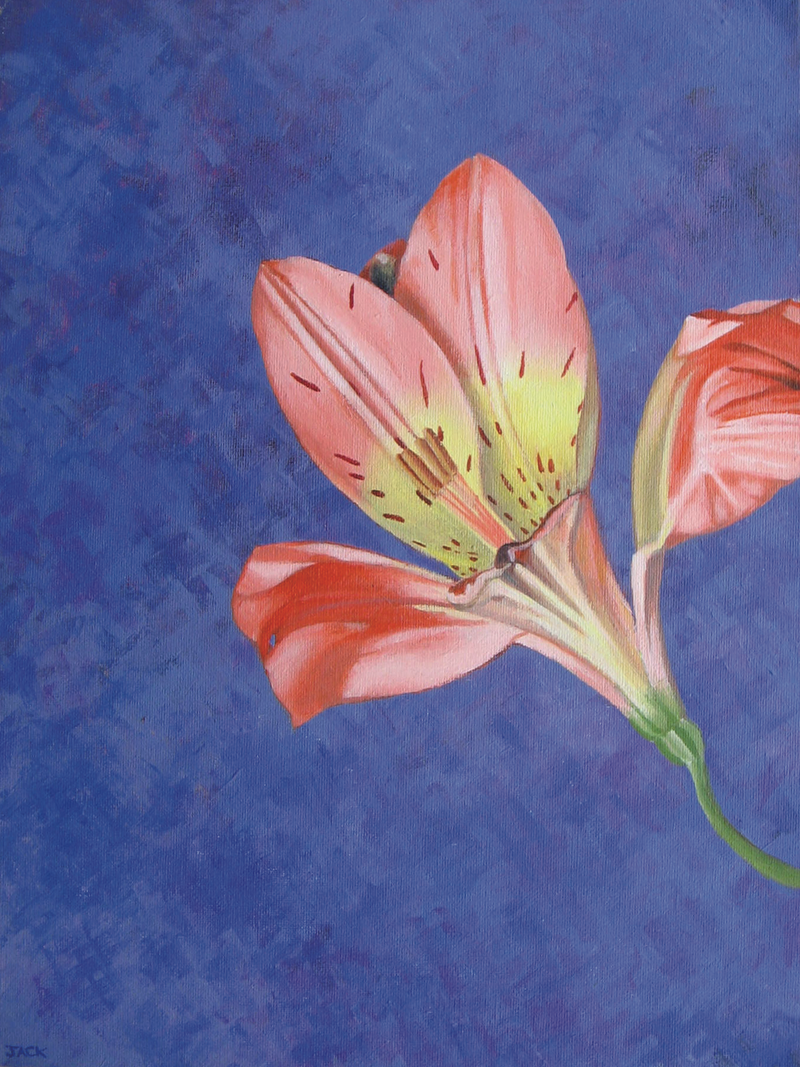 Peruvian lily by jacqueline briner paintings for sale bluethumb creativework peruvian lily by jacqueline briner arcylic painting izmirmasajfo