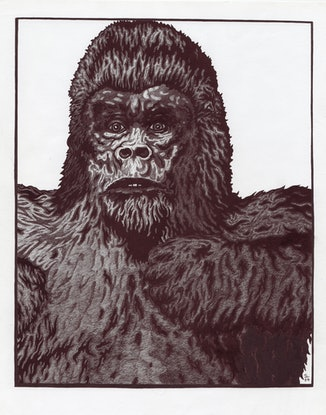 (CreativeWork) Gorilla by Jolon Larter. Drawings. Shop online at Bluethumb.