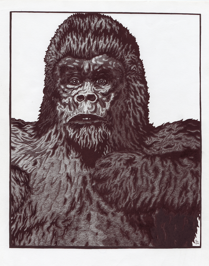 (CreativeWork) Gorilla by Jolon Larter. drawing. Shop online at Bluethumb.