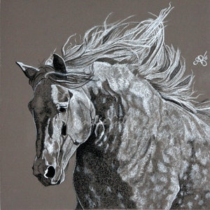 (CreativeWork) Scottish Pride by Ainslie Gilles-Patel. drawing. Shop online at Bluethumb.