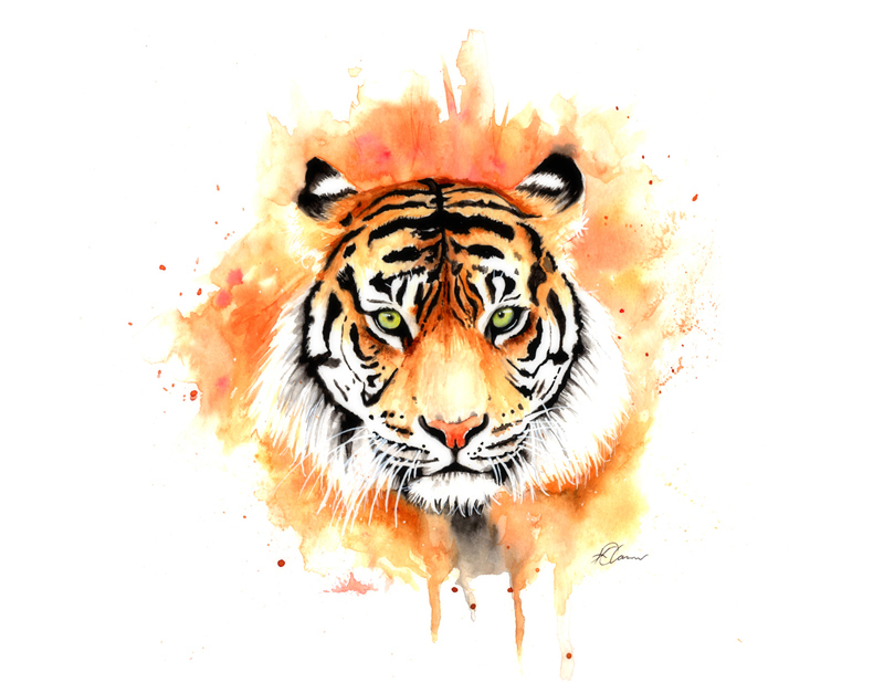 (CreativeWork) Tiger in Watercolour by Kieran O'Connor. watercolour. Shop online at Bluethumb.