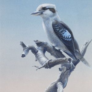 (CreativeWork) Kookaburra at sunset by William Ritchie. watercolour. Shop online at Bluethumb.