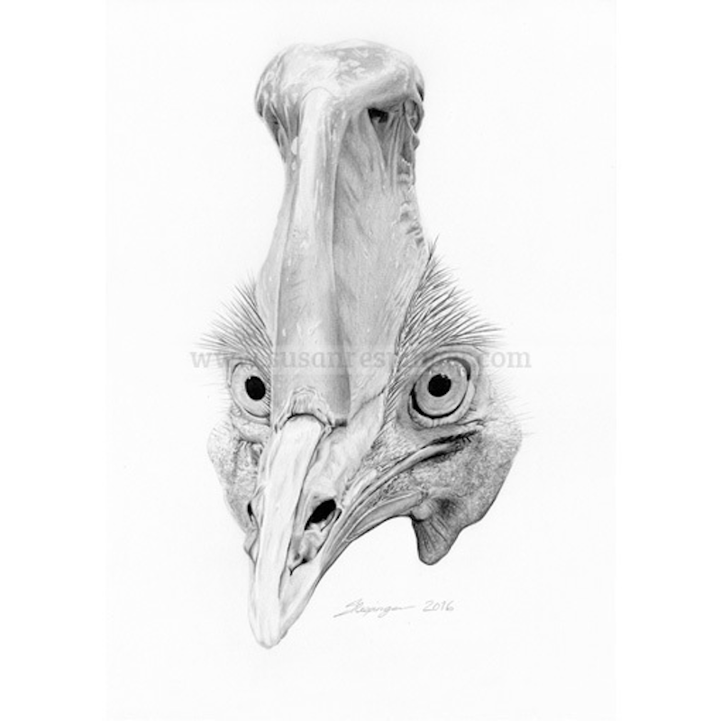 (CreativeWork) Cassowary Head  by Susan Respinger. drawing. Shop online at Bluethumb.