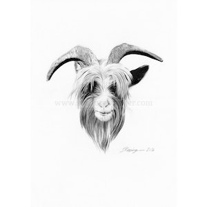 (CreativeWork) Dutch Landrace Goat Head by Susan Respinger. drawing. Shop online at Bluethumb.