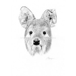 (CreativeWork) Vampire Deer by Susan Respinger. drawing. Shop online at Bluethumb.