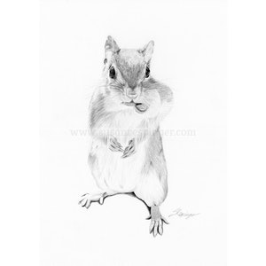 (CreativeWork) Squirrel by Susan Respinger. drawing. Shop online at Bluethumb.