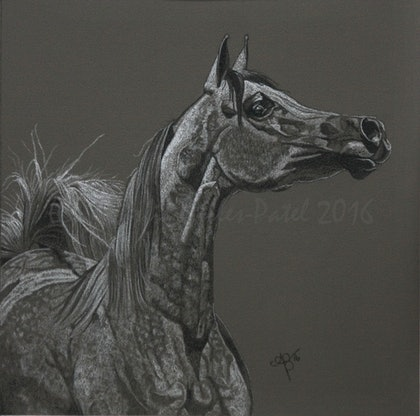 (CreativeWork) Fanfare by Ainslie Gilles-Patel. drawing. Shop online at Bluethumb.