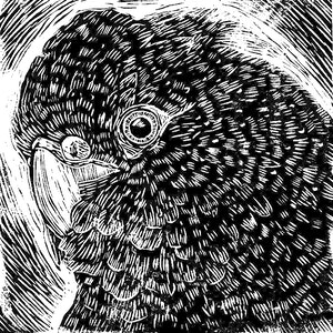(CreativeWork) Black Cockatoo Ed. 38 of 50 by Matthew Broughton. print. Shop online at Bluethumb.