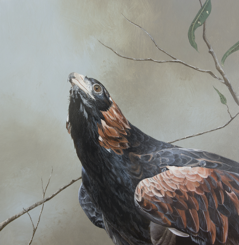 (CreativeWork) Monarch of the Skies (Black-Breasted Buzzard) by Dario Zanesco. Acrylic Paint. Shop online at Bluethumb.