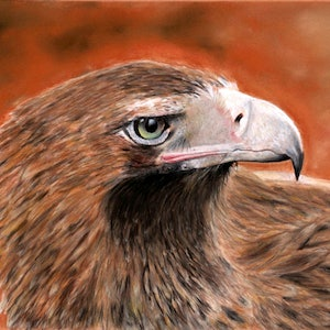 (CreativeWork) Eagle by Gabriele Phillis. other-media. Shop online at Bluethumb.